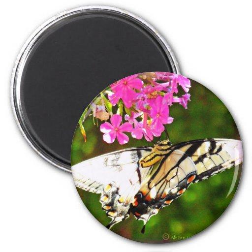 Mariposa en la flor rosada imán para frigorifico
