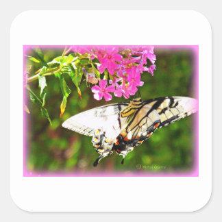 Mariposa en la flor rosada pegatina cuadrada