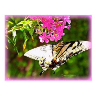 Mariposa en la flor rosada postales