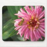mariposa en la flor salvaje tapetes de ratón