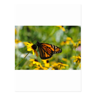 Mariposa en la flor postal