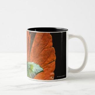Mariposa en la hoja 2 taza dos tonos