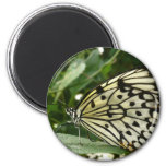 Mariposa en la hoja imán