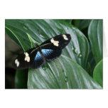 Mariposa en la hoja tarjetón