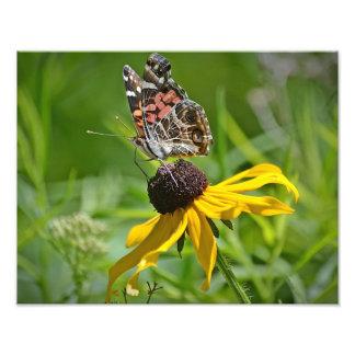 Mariposa en la impresión de la foto de la flor fotografías