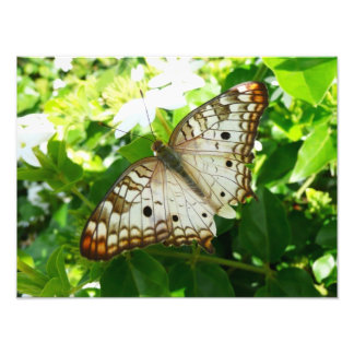 Mariposa en la impresión de la foto del jazmín