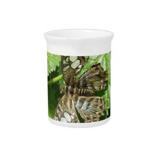 Mariposa en la jarra de la hoja
