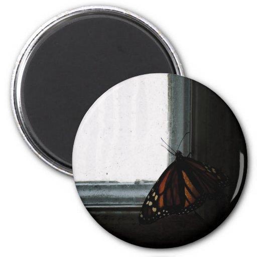 Mariposa en la oscuridad iman de frigorífico