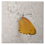 Mariposa en la pared, provincia de Gauteng, del su Tejas Ceramicas