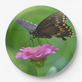 Mariposa en la placa de papel del Zinnia Platos De Papel