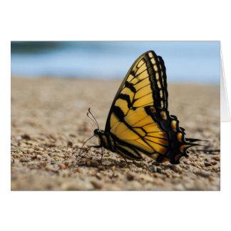 Mariposa en la playa tarjeta pequeña