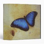 "Mariposa en la superficie pintada del estómago de  carpeta 1 1/2"""