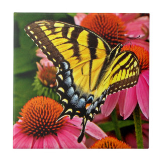 Mariposa en la teja de la flor v22