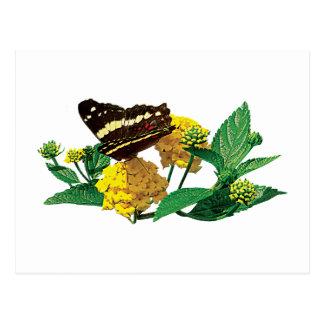 Mariposa en Lantana amarillo Postal