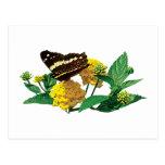 Mariposa en Lantana amarillo Tarjetas Postales