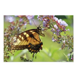 Mariposa en las flores púrpuras cojinete