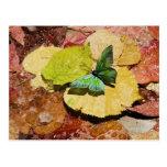 Mariposa en las hojas mojadas del otoño postales