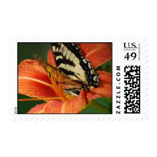 Mariposa en lirio sellos