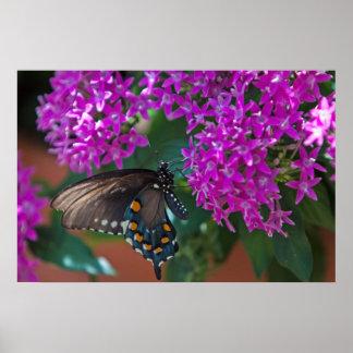 Mariposa en los jardines de Olbrich en los WI de M Poster