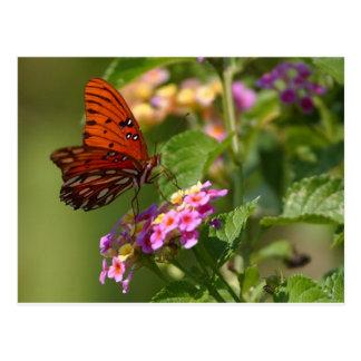 Mariposa en Luisiana Postales