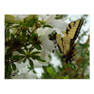 Mariposa en primavera postales