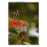 Mariposa en tarjeta de nota en blanco real de Poin
