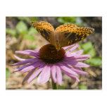 Mariposa en un Coneflower púrpura Postales