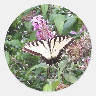 Mariposa en un pegatina de Bush de mariposa