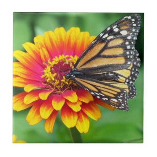 Mariposa en una flor azulejo cerámica