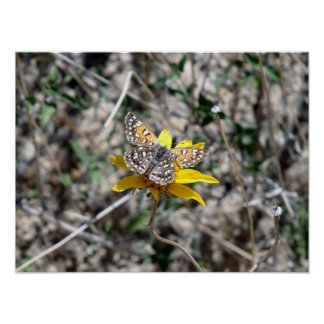 Mariposa en una flor, parque nacional de la yuca posters