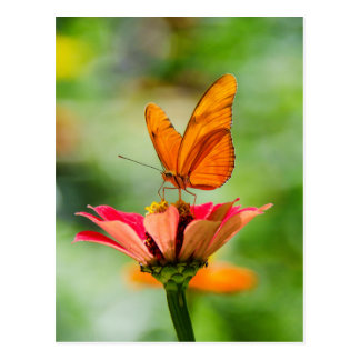 Mariposa en una flor postal