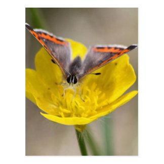 Mariposa en una flor postales