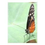 Mariposa en una hoja comunicado personal