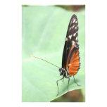 Mariposa en una hoja papelería de diseño
