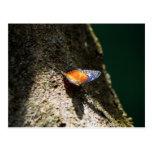 Mariposa en una postal del árbol