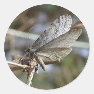Mariposa en una ramita pegatina redonda