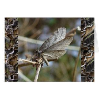 Mariposa en una ramita tarjeta de felicitación