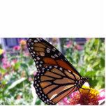 mariposa escultura fotográfica