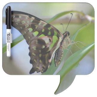 Mariposa espectacular pizarra