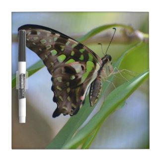Mariposa espectacular pizarras blancas