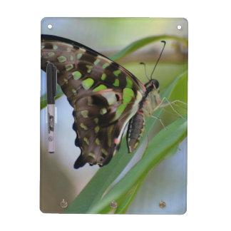 Mariposa espectacular tableros blancos