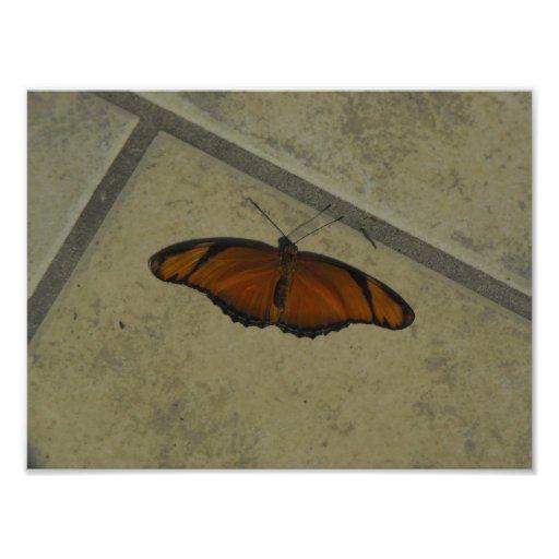 Mariposa exótica fotografías