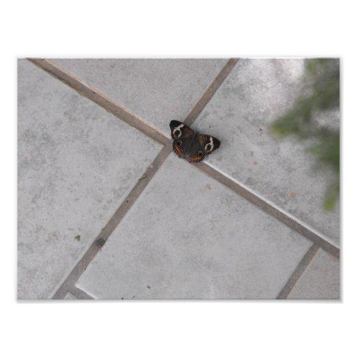 Mariposa exótica fotos