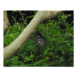 Mariposa exótica impresiones fotograficas