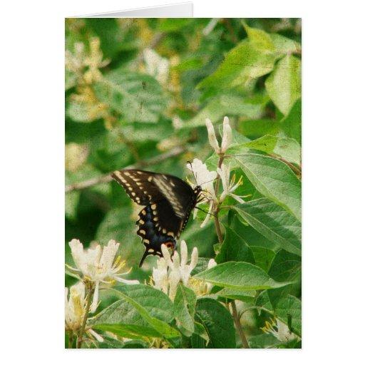 Mariposa Felicitacion