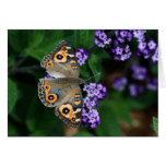 Mariposa Felicitaciones