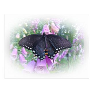 Mariposa femenina de Spicebush Swallowtail Tarjeta Postal