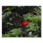 Mariposa Fotografias