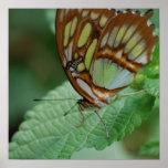 Mariposa fresca impresiones