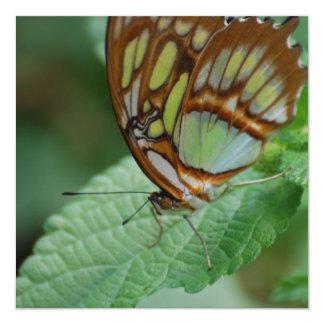 Mariposa fresca